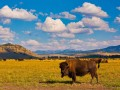 stage photo yellowstone grand teton amar guillen photogaphe large 27