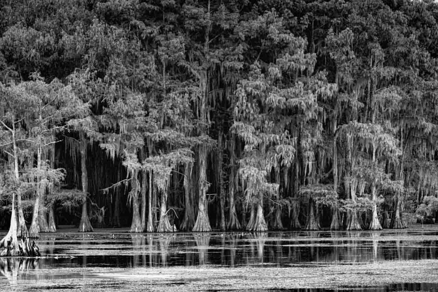Caddo Lake in Texas in United States in black and white