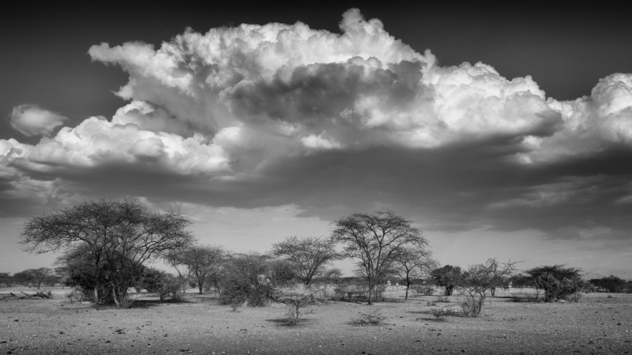 Trees and clouds in Shompole in Ethiopia in black and white.