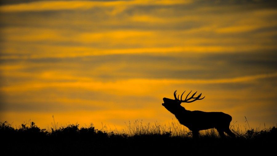 Wildlife Photo workshop bugle of the deer in France with Amar Gu