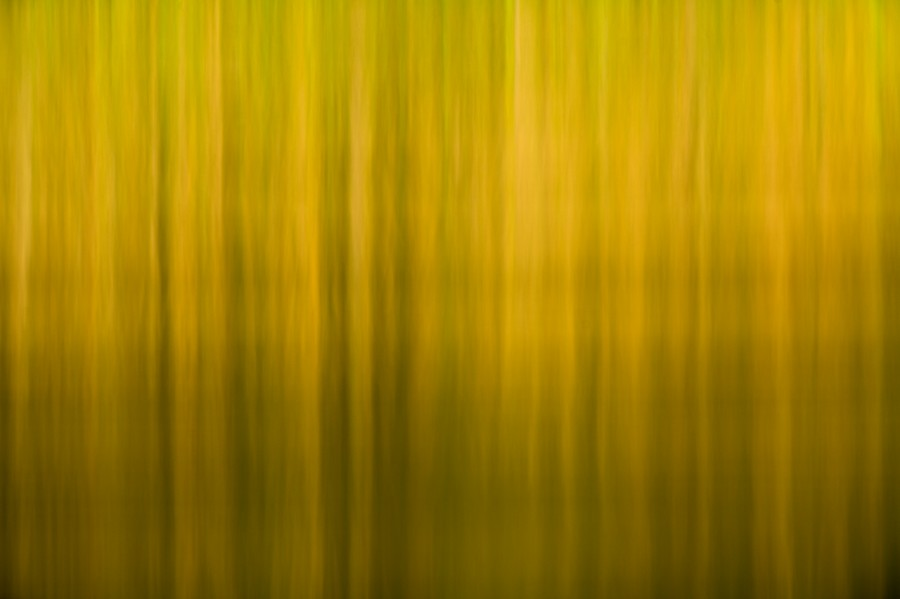 Conceptual photograph of nature in color by Amar Guillen, photog