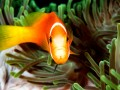 Fish look by Amar Guillen, photographer artist.